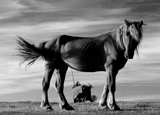 Adam Falkowski - Co ma koń do wiatraka?